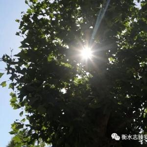 安平志臻 一棵樹的自白